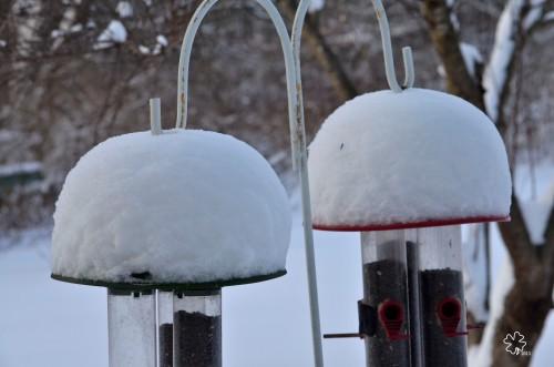 DSC_5577 036 2-9-13 snow dines