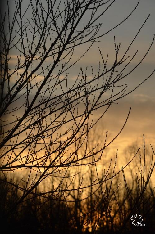 DSC_6414 040 2-18-13 sunset