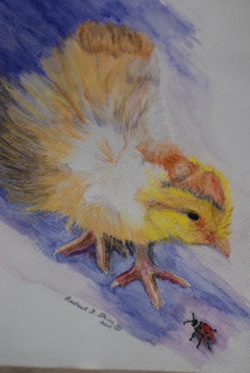 chick one (2)