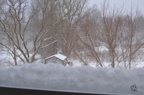 DSC_1098 059 4-2-13 snowy sill