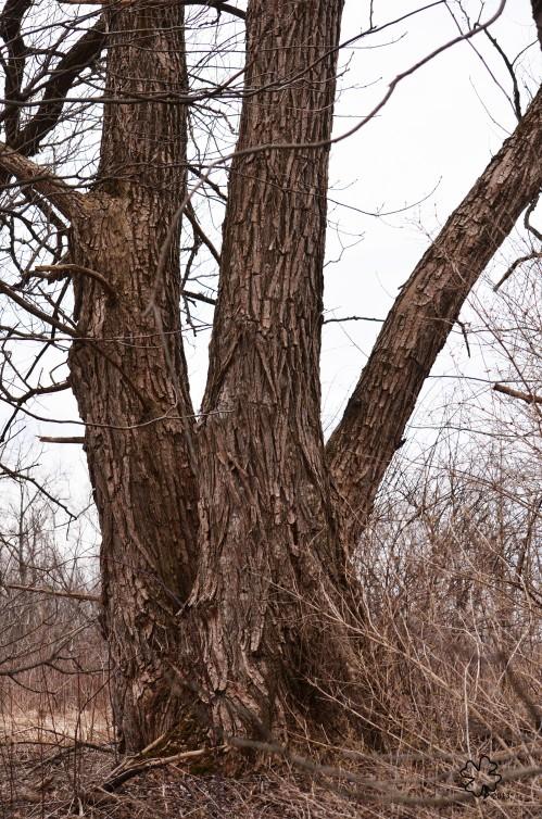 DSC_1240 061 408013 tree trunks