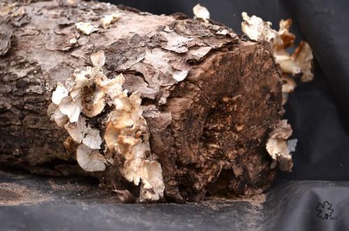 DSC_1256 061 4-8-13 rotting log