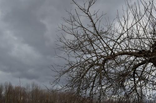 DSC_1454 062 4-14-13 gray sky