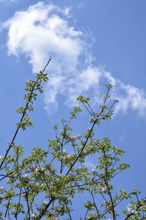 DSC_373 074 5-9-13 maple branches-sky
