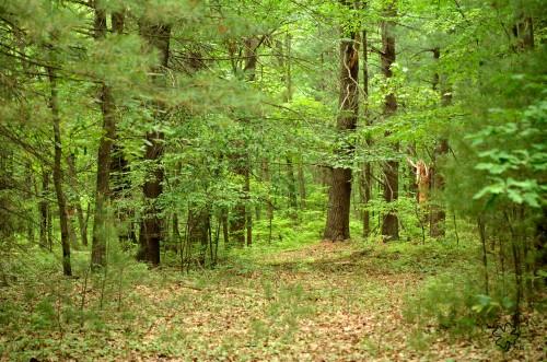 DSC_5665 084 5-5-13 woods
