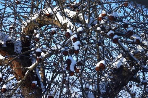 Snow caps on Frozen Apples