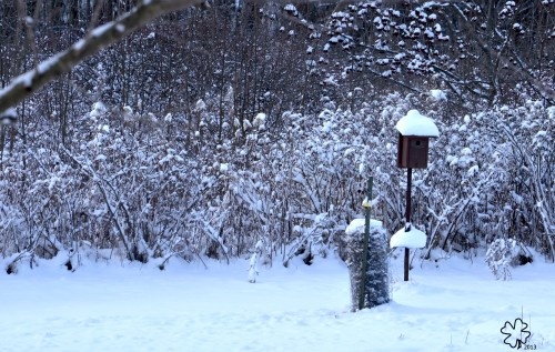 Snow on Bushes and Empty Bluebird House