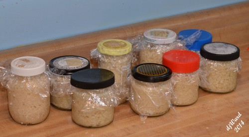 Jars packed, ready for the freezer.