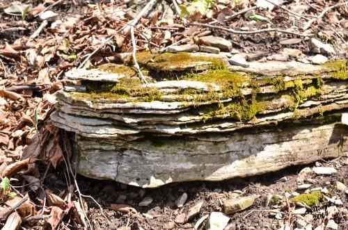 DSC_0095038 4-28-14 mssy rocks