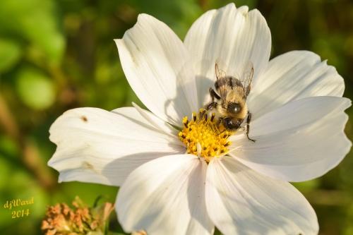 One Happy Bee,,