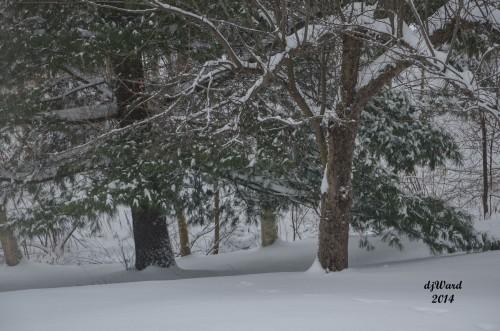 DSC_3953_119 12-11-14 snowy day