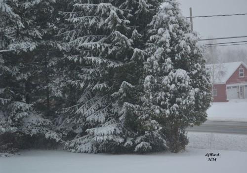DSC_3963_119 12-11-14 snowing