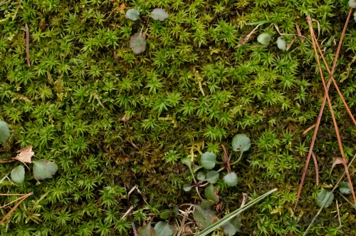 Green mosses in a shady spot