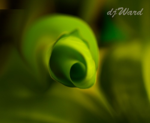 Abstract of the tip of a leaf on a house plant